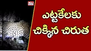 ఎట్టకేలకు చిక్కిన చిరుత | Forest Officers Caught Leopard In East Godavari District | CVR News - CVRNEWSOFFICIAL