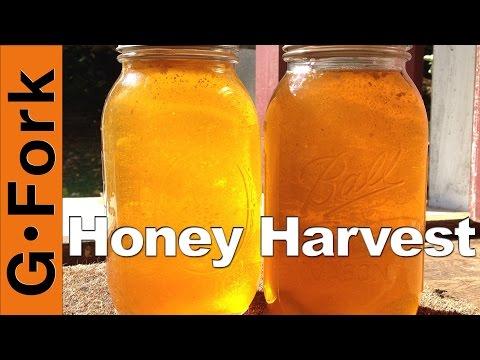 How to Harvest Honey - Beekeeping 101 - GardenFork
