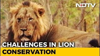 Lions: The Last Stand? - NDTV