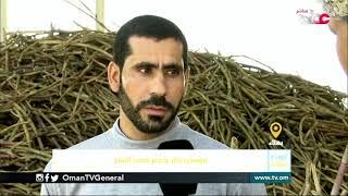 ربط مباشر من ولاية بهلاء بمحافظة الداخلية  للحديث حول موسم حصاد وعصر قصب السكر