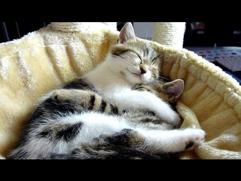 Top 20 Kitten and Cat Hugs . Cutest Cats Moments.