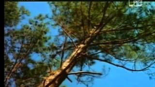 Dance 2 Trance - Power of American Natives (Dj Quicksilver Remix)