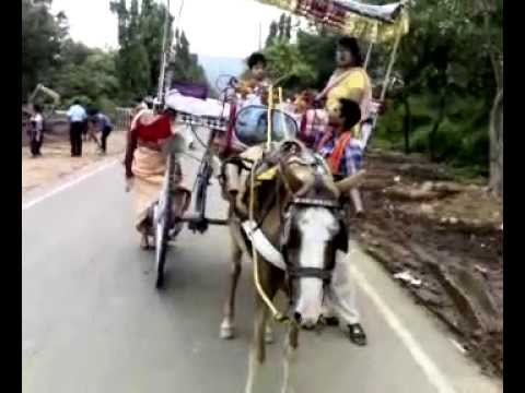 Indian Amature Riding Horse Cart