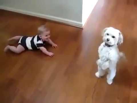 Babies and Dogs - Dzieci i psy śmieszne dzieci