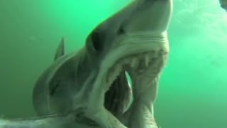 Mako shark attacks GoPro camera mounted in fish rig - CNN