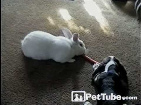 Rabbit and Dog Share Carrot