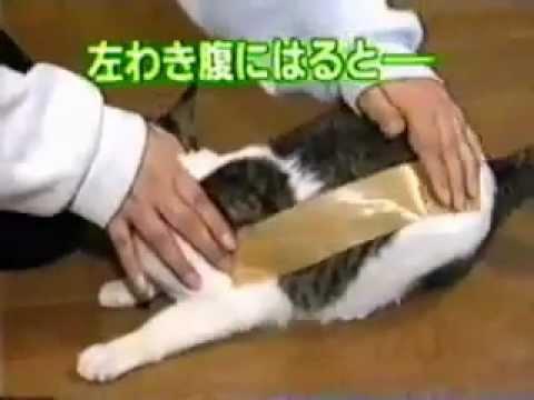 ماذا يحصل اذا وضعنا شريط لاصق على شعر القطه ؟؟