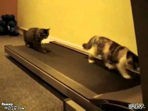 Kočky atletky:D