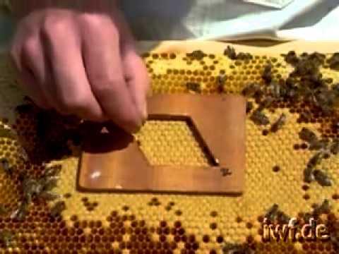 Η σημασία της επιλογής γονιδίων στη μελισσοκομία