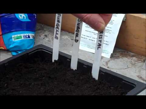 Grow your own tomatoes - Sowing Tomato Seeds