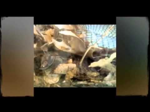 Primer nacimiento de Cobra Real en cautividad en Terra Natura Benidorm