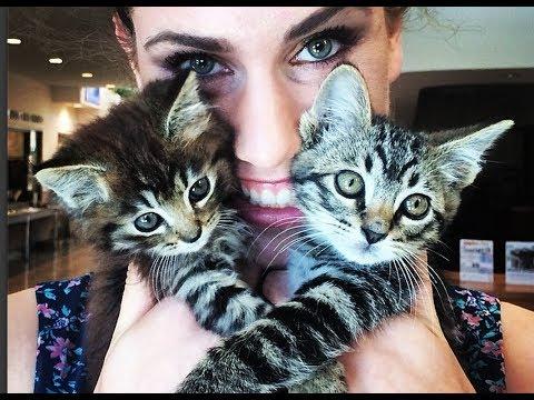 Car Crash Kittens!!!