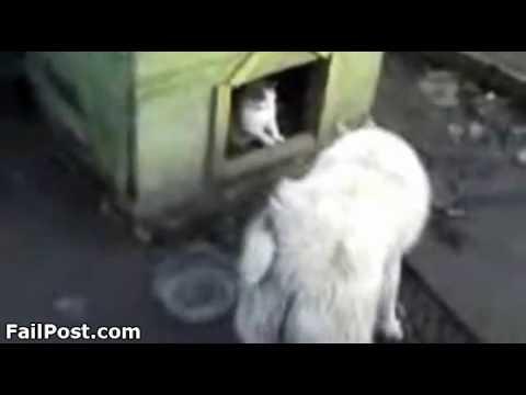 Pas izbačen iz svoje kućice