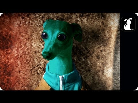 Star Wars Parody - Paw Warz - Haz Definitely Shot First Scene - Petody