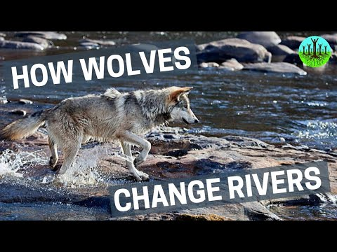 How Wolves Change Rivers 2014 documentary movie, default video feature image, click play to watch stream online