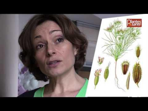 Aude Maillard, aromathérapeuthe : sa formule pour le confort intestinal