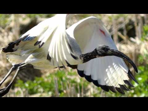 Birdwatching nel Delta del Po - I nostri Amici Alati