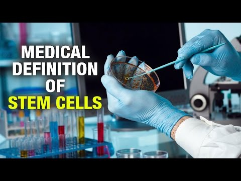 Medical Definition of Stem Cells - Dr. Satish Arolkar - Joint plus