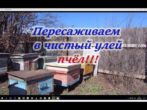 Переселение зимовалой семьи в чистый улей от А до Я, для начинающих. Beekeeping.