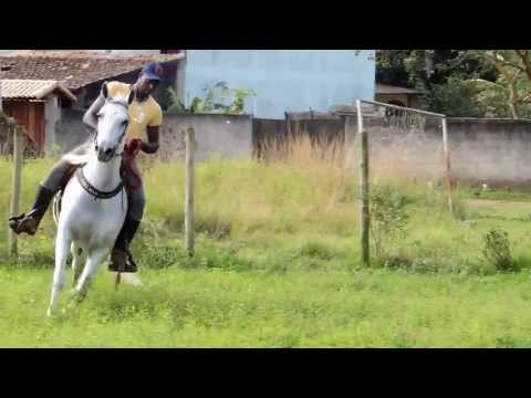 Cavalo Mangalarga Marchador à venda - Boniface Capim Fino