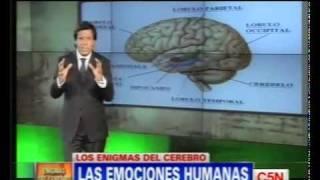 Los Enigmas del Cerebro [ Serie Actualizable ]