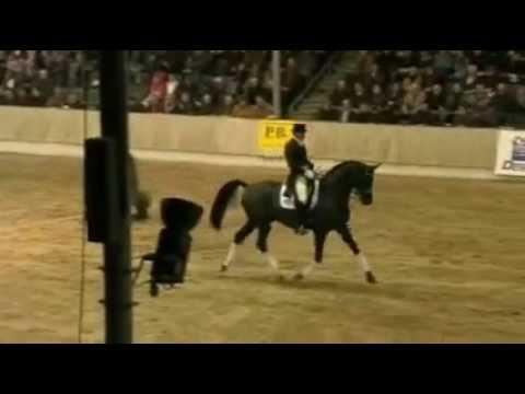 DESPERADOS: Hanoverian DE NIRO stallion by www.equine-evolution.com