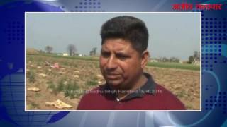 लुधियाना (वीडियो) : आलू की बम्पर पैदावार के बावजूद किसानों के चेहरे मुरझाये