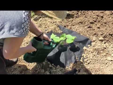 Granny Di's Gardening Lesson #1- Growing Squash