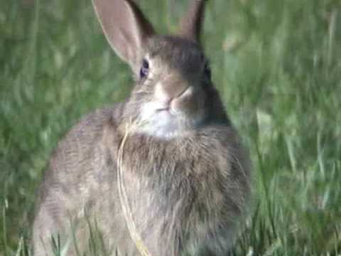 Animals in action - Wild rabbits