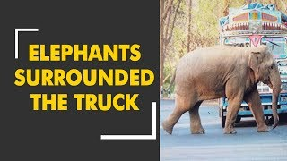 Elephants surrounded a truck in Sonigara forest near Ambikapur-Varanasi way - ZEENEWS