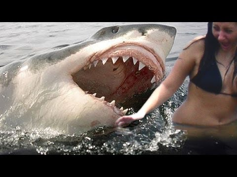 SHARK ATTACKS caught on tape