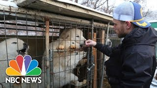 U.S. Olympian Gus Kenworthy 'heartbroken' By South Korean Dog Meat Farm | NBC News - NBCNEWS