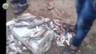 شاهد ماذا فعل قائد المقاطعة 2 بخريبكة بممتلكات بائعي السمك !