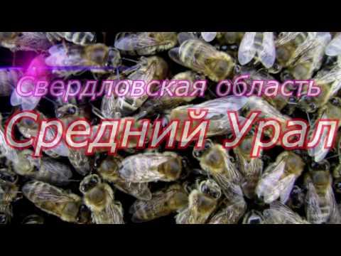 Улей со стеклом, пчёлы в клубе, зимовка у Карники продолжается.Beekeeping.