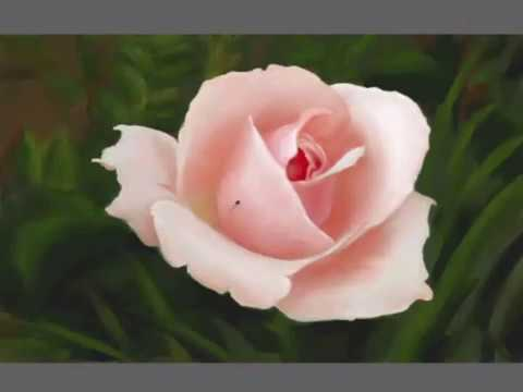 Desenhando uma Rosa cor-de-rosa   -   Speed Paint Rose - Speed Drawing Rose