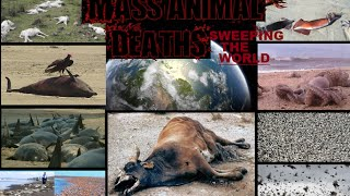 Mass animal deaths sweeping the world 2011