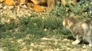 2. Wie kleine Tiere groß werden