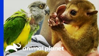 Two Exotic Pets Get Expert Treatment From Dr Ross | The Vet Life - ANIMALPLANETTV