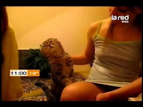 Los 10 videos más vistos de animales en Internet