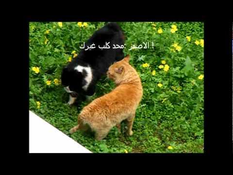 طوشة قطط متسولة !!