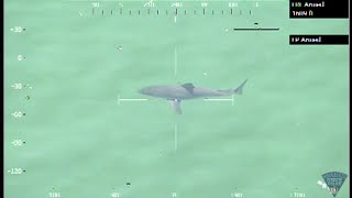 اخلاء شاطئ ماساتشوستس بعد رصد القرش الابيض الكبير (فيديو)