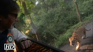 Caught on Cam: Tiger chasing Amitabh Bachchan's Vehicle