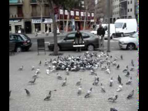 Catch the pigeon