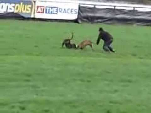 Protest against coursing - 2nd March 2014