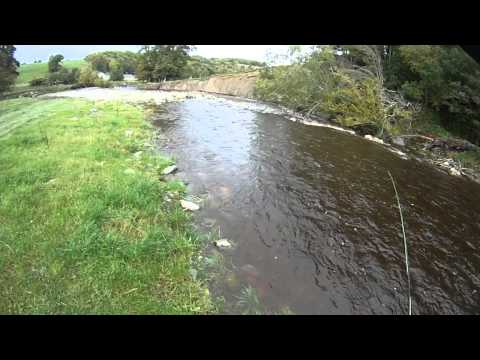 River Elwy Fly Fishing