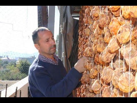 Adana'da 80 ton hurmayı kurutup, satıyor