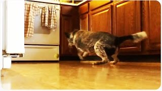 Dog Runs into Oven | Dinner Is Shattered