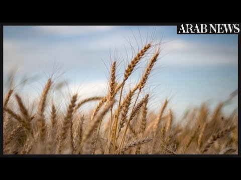 In Syria's breadbasket, Kurds and regime battle for wheat