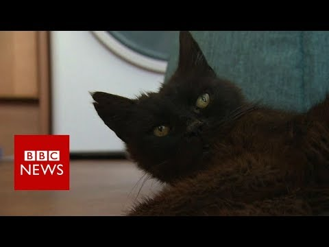 connectYoutube - Missing cat found after 15 years - BBC News