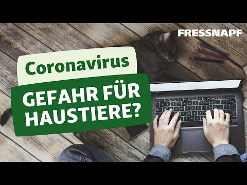 Coronavirus – eine Gefahr für mein Haustier?